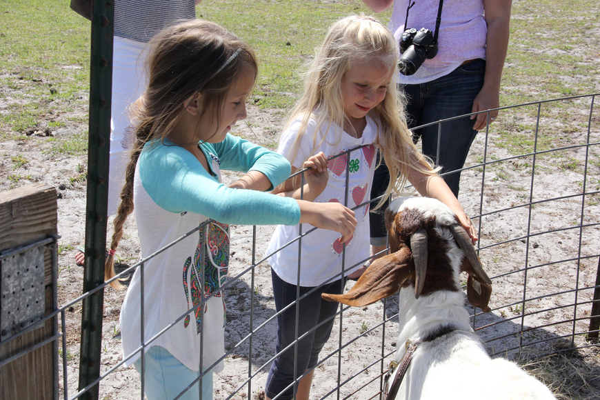 Kiarra Stannard and Scarlett Robinson visit with a goat at the FFA Farm Day Open House on Saturday. Photo by Jacque Estes