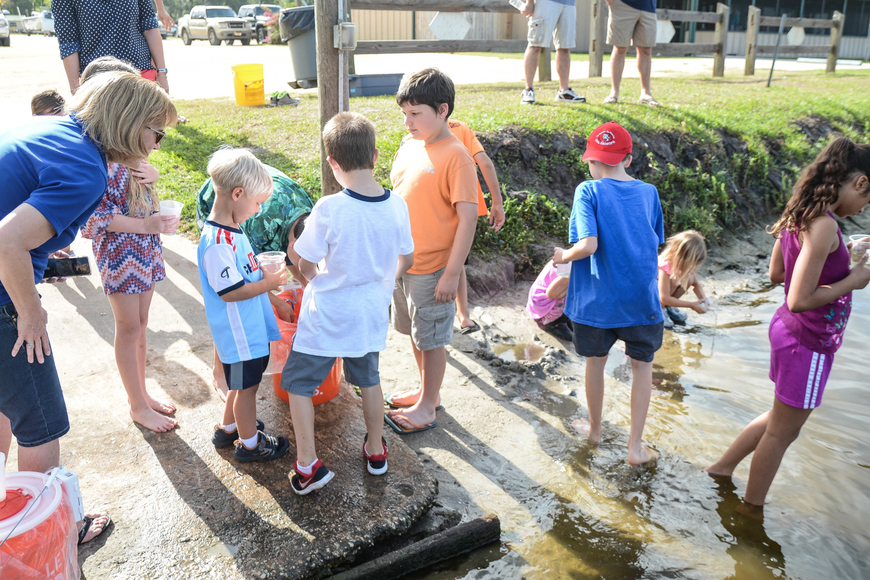 Old Kings Elementary students gather around the fish bucket to prepare to release the bass into the water. Photo by Paige Wilson