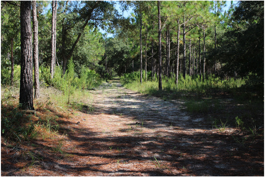 Princess Place is divided like a checkerboard by roads like this, which mark off areas for controlled burns. Photo provided by Flagler County