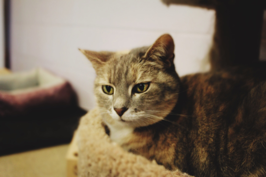 April – 38079548: 3-year-old female domestic short-haired cat. Photo courtesy of Katie Share