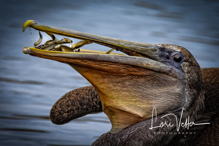 Lori Vetter's earned second-place award at the recent Florida's Birding and Photo Fest with this photo she calls