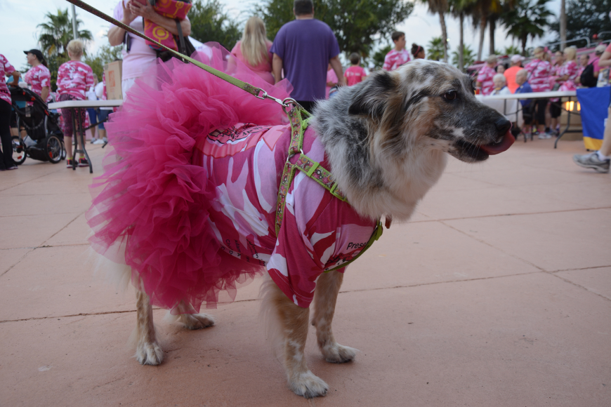 Australian Shepard, Sydney, excitedly greeted all the runners as they went by.