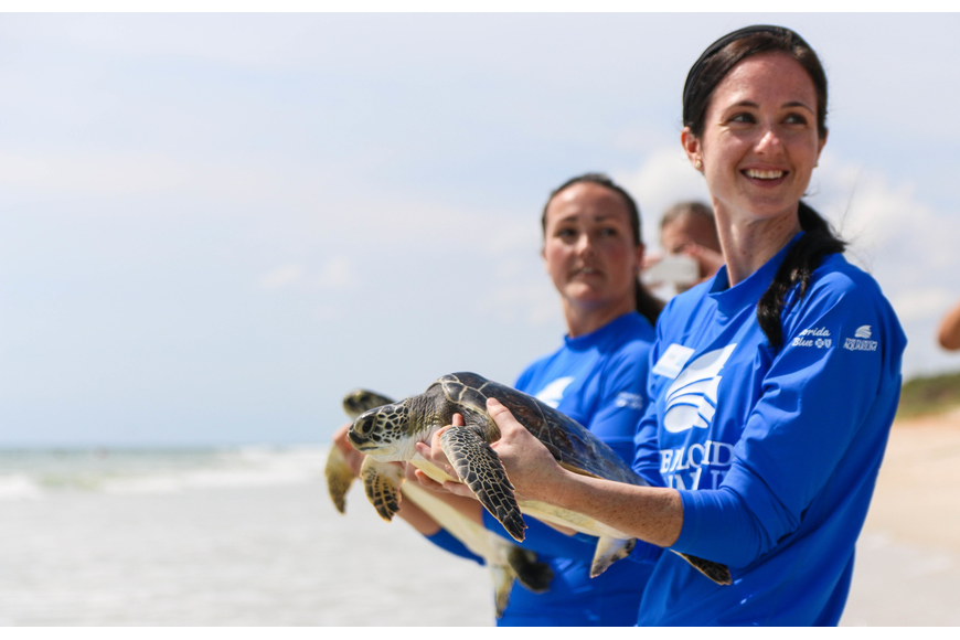 Florida Aquarium Senior Sea Turtle Biologist Rachel Thomas and biologist Katie Hartwig carry juvenile green sea turtles Canaveral and Enterprise to be released. Photo by Paige Wilson