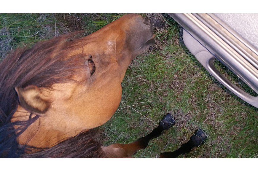 The Weeks family's horse, Buckskin, was stolen some time around late May. (Photo courtesy of the Flagler County Sheriff's Office)